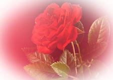 flower_gr225.jpg