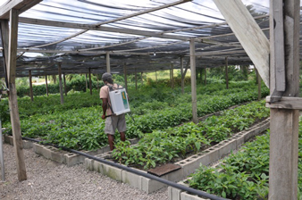 greenhouse_antigua02-05-2013.jpg