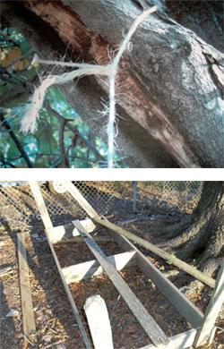 miss_tree12-21-2010.jpg
