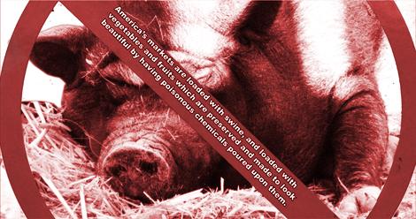 swine470.jpg