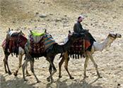 camel_rider_no19_10-29-2013.jpg